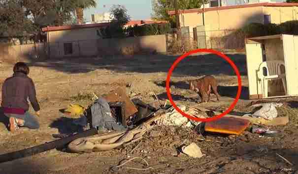 dinfo.gr - Τι συνέβη όταν μια γυναίκα συνάντησε ένα πολύ άρρωστο σκυλάκι στο δρόμο;