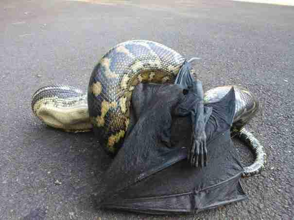 dinfo.gr - 28 τρομακτικές φωτογραφίες που θα σας κάνουν να μην θέλετε να βγείτε από το σπίτι!