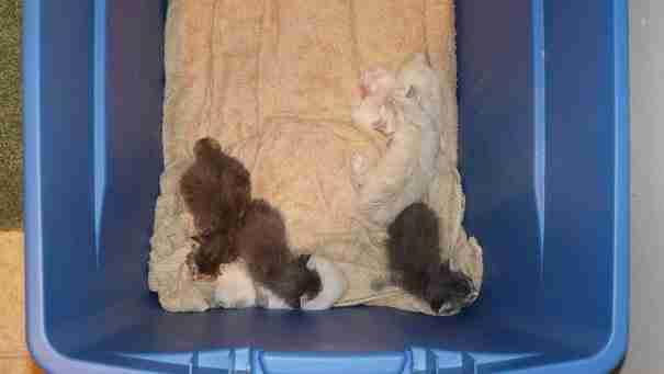 dinfo.gr - Ένα νεογέννητο γατάκι βρέθηκε λίγο πριν πεθάνει. Δείτε την απίστευτη μεταμόρφωση του!