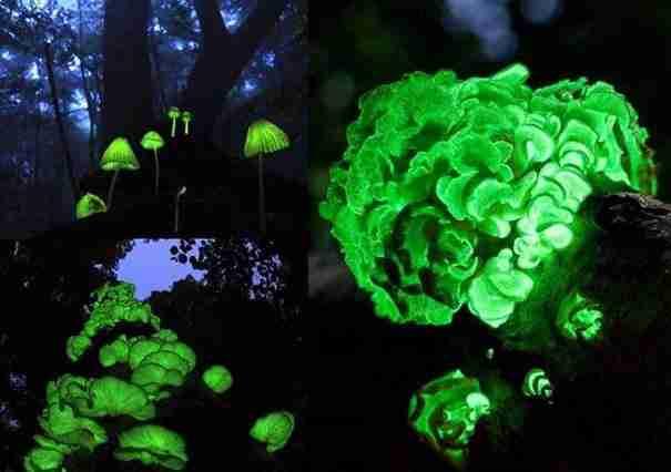 dinfo.gr - Η ομορφιά της φύσης μέσα από 30 μοναδικές φωτογραφίες
