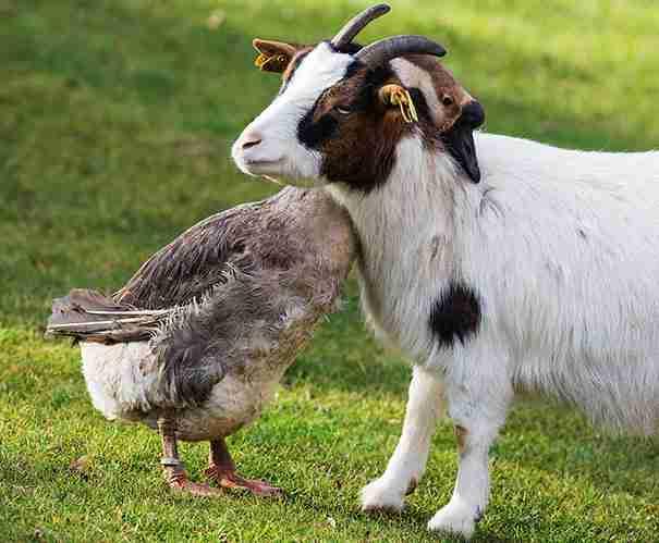 dinfo.gr - 30 αστεία γεγονότα για τα ζώα που θα σας κάνουν να χαμογελάσετε!