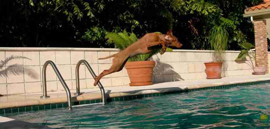 dinfo.gr - Συγκινητική αντίδραση σκύλου μόλις βλέπει τον ιδιοκτήτη του να χάνεται κάτω από το νερό