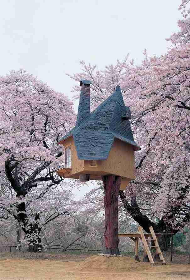 dinfo.gr - Υπάρχει ένα δεντρόσπιτο στην Ιαπωνία που μοιάζει σαν να ξεπήδησε από παραμύθι!