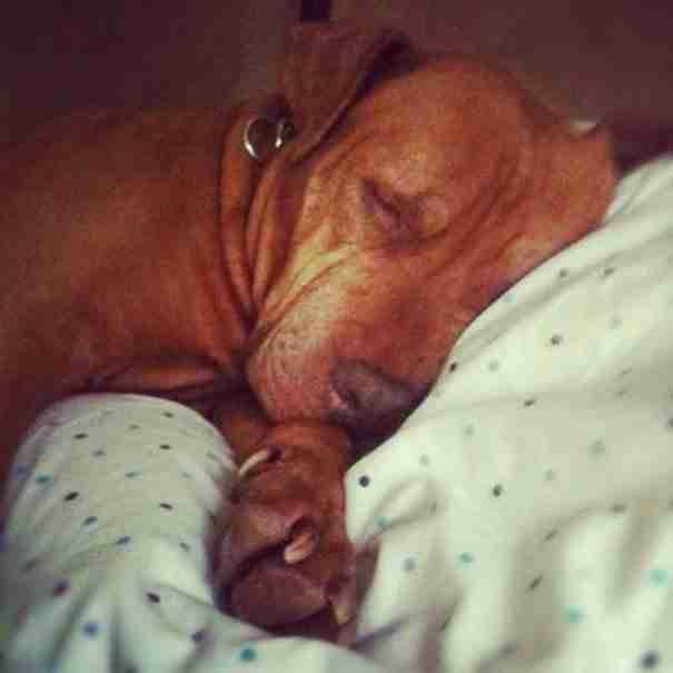 dinfo.gr - Έσωσαν ένα κακοποιημένο σκυλί και στη συνέχεια έστειλαν γράμμα στους ιδιοκτήτες του! Διαβάστε το..