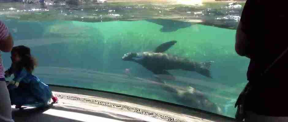 dinfo.gr - Η αντίδραση αυτού του θαλάσσιου λιονταριού μόλις βλέπει ένα κοριτσάκι να πέφτει είναι συγκινητική