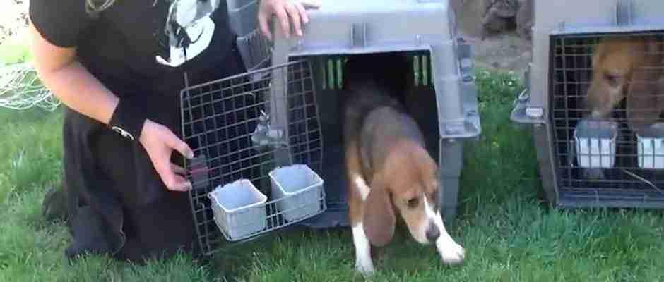 Μετά από μια ζωή σε ένα εργαστήριο, εννέα σκύλοι βλέπουν για πρώτη φορά τον ήλιο!