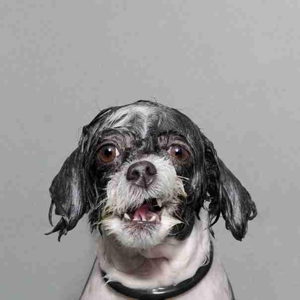 "dinfo.gr - ""Βρεγμένοι σκύλοι""  Μια σειρά φωτογραφιών με σκύλους που περνούν μια.. πολύ δύσκολη μέρα!"