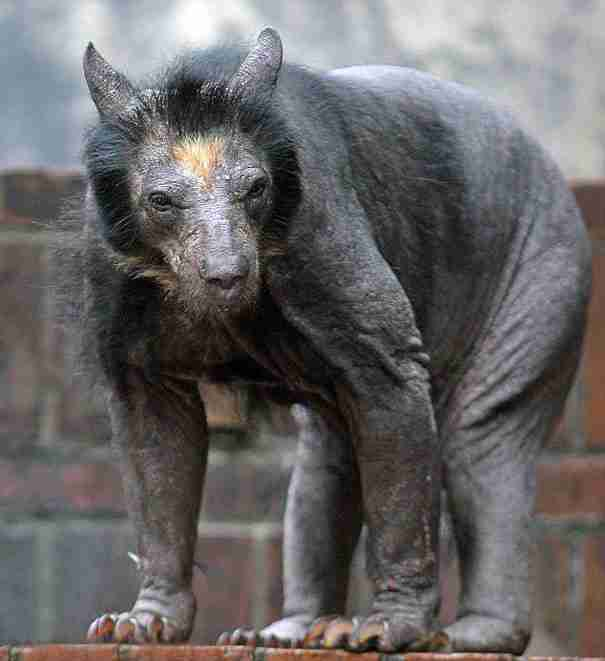 dinfo.gr - 15 ζώα χωρίς καθόλου τρίχες. Θα μπορέσετε να τα αναγνωρίσετε;