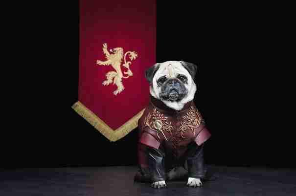 dinfo.gr - Τα κουτάβια του Westeros: Τρια Παγκ αναπαριστούν το Game Of Thrones
