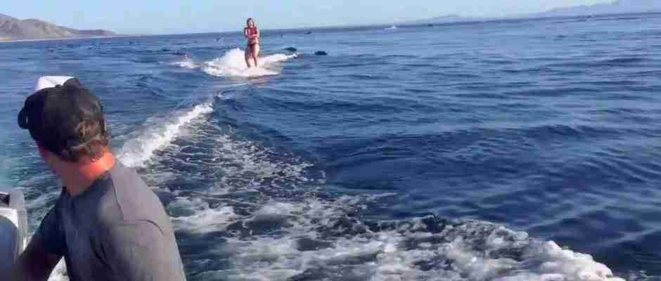 dinfo.gr - Έκανε Wakeboarding στην ανοικτή θάλασσα όταν ξαφνικά είδε αυτό. Απίστευτο!