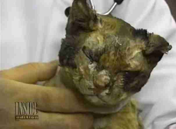 dinfo.gr - Η ηρωική γάτα που πήδηξε 5 φορές στη φωτιά για να σώσει τα μικρά της