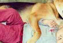 Η ιστορία αγάπης και σκανταλιάς που έλιωσε το Ιντερνετ -Το μωρό που έχει γίνει αχώριστο με τον τεράστιο σκύλο του Πηγή: Η ιστορία αγάπης και σκανταλιάς που έλιωσε το Ιντερνετ -Το μωρό που έχει γίνει αχώριστο με τον τεράστιο σκύλο του