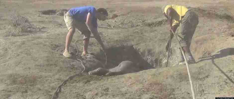 dinfo.gr - Η επανένωση μιας μαμάς ελεφαντίνας με το μικρό της είναι ότι πιο συγκινητικό θα δείτε σήμερα!