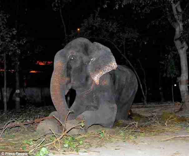 Αυτός ο ελέφαντας έκανε το πιο απίθανο πράγμα όταν τον έσωσαν από τον βασανιστή του - dinfo.gr