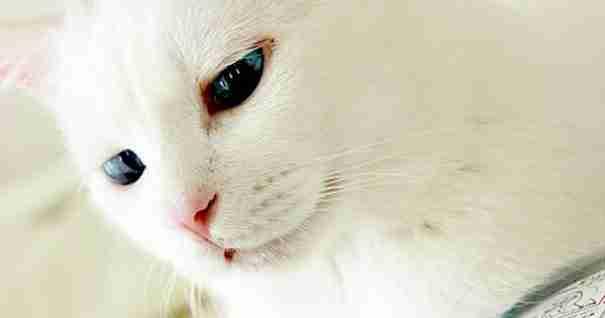 Η Σέτσου η γάτα έχει τα πιο όμορφα μάτια όταν δεν κοιμάται. Γιατί όταν πέσει για ύπνο.. - dinfo.gr