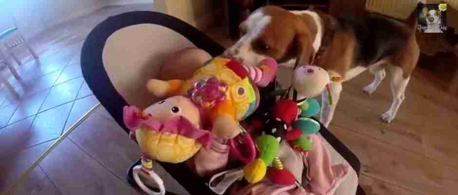 dinfo.gr - Ένας σκύλος κλέβει το παιχνίδι ενός μωρού. Όταν αυτό όμως βάζει τα κλάματα, κάνει το πιο γλυκό πράγμα