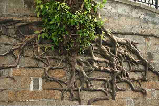 12 ρίζες δέντρων που κερδίζουν άνετα τη μάχη με το τσιμέντο! - dinfo.gr
