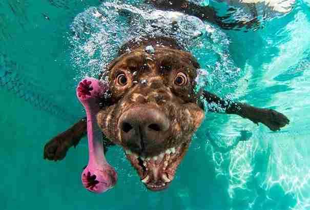 dinfo.gr - Έχετε αναρωτηθεί ποτέ πως μοιάζει το σκυλί σας όταν βουτάει στο νερό;