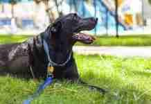 Η τελευταία μέρα της ζωής ενός σκύλου ήταν πολύ όμορφη αλλά και εντελώς σπαρακτική!