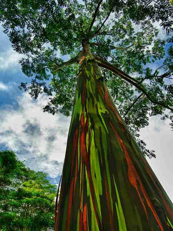 16 από τα ωραιότερα δέντρα του κόσμου