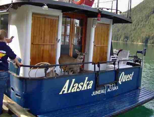 Έψαχναν για φάλαινες στην Αλάσκα αλλά δεν πιστέψετε αυτό που βρήκαν! - dinfo.gr