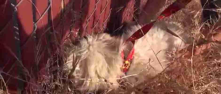 Όταν πήγαν να σώσουν αυτό το σκυλάκι ήταν τόσο τρομαγμένο που έθαψε το κεφάλι του!