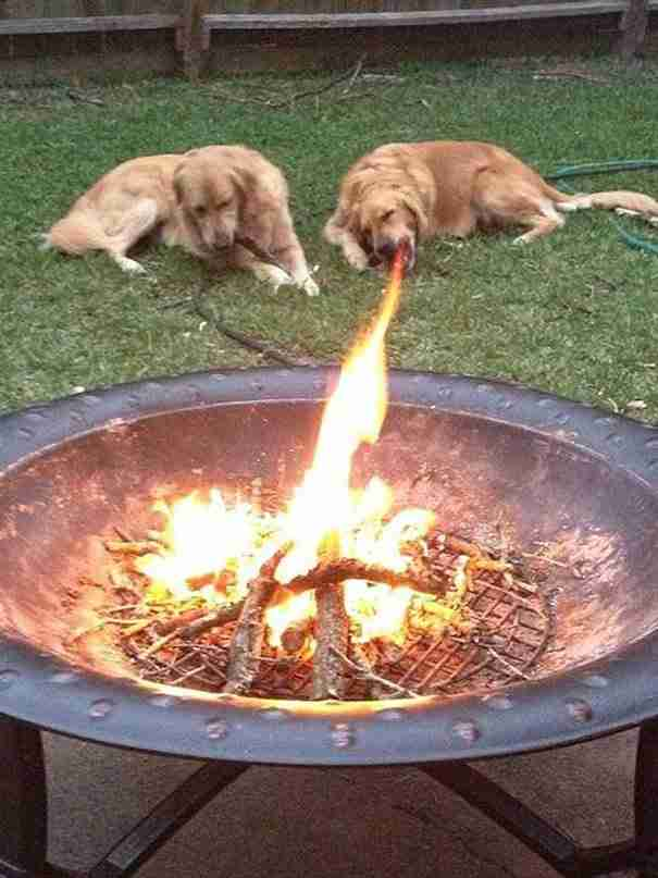 33 σκύλοι φωτογραφίζονται την πιο κατάλληλη στιγμή και προκαλούν άφθονο γέλιο!