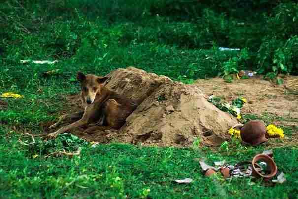 Όταν πέθανε ο ιδιοκτήτης του, αυτός ο σκύλος έκανε το πιο συγκινητικό πράγμα!