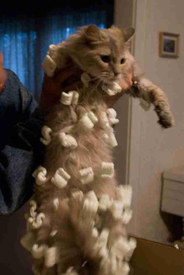 Γάτες ανακαλύπτουν με τον πιο δυσάρεστο τρόπο τι σημαίνει στατικός ηλεκτρισμός!