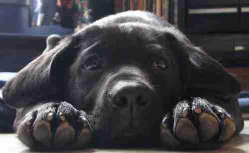 Κανείς δεν ήθελε να υιοθετήσει αυτό το σκυλί. Ίσως επειδή δεν γνώριζαν το μυστικό του