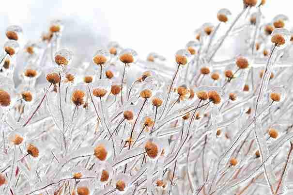 Όταν ο πάγος δημιουργεί τέχνη. 24 υπέροχες φωτογραφίες!
