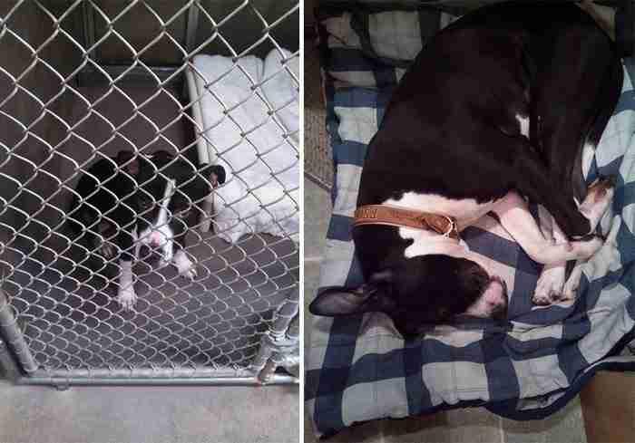 15 φωτογραφίες παρουσιάζουν τα συναισθήματα ενός ζώου πριν και μετά την υιοθεσία του