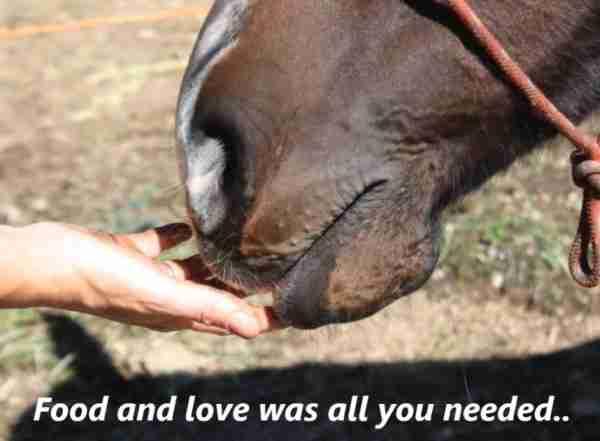 Δείτε πως ένα ετοιμοθάνατο άλογο βρήκε μια δεύτερη ευκαιρία