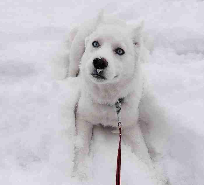 # 3 Η πρώτη ημέρα της Kiora στο χιόνι
