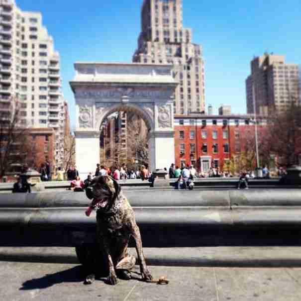 Όταν έμαθε ότι ο σκύλος της έχει καρκίνο, έκανε μαζί του κάτι πολύ συγκινητικό