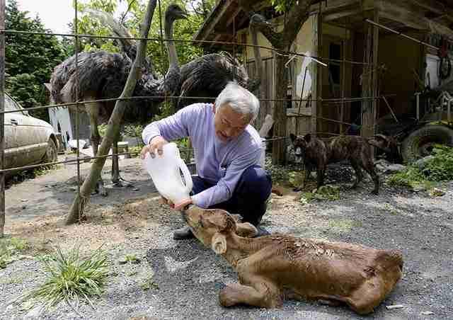 Ο άνθρωπος που επέστρεψε στην Φουκουσίμα για να φροντίσει τα ζώα που όλοι άφησαν πίσω