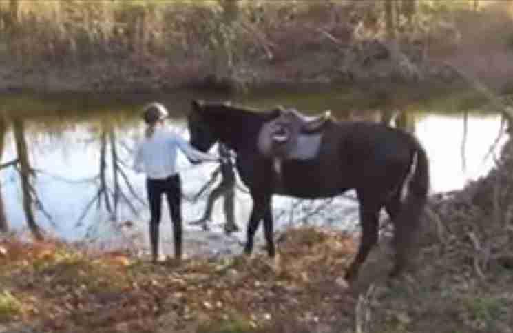 Η πρώτη φορά στο νερό αυτού του αλόγου δεν θα μπορούσε να πάει καλύτερα!