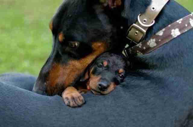 Αυτή η στιγμή, που παρουσιάζει τη πραγματική αγάπη μιας μάνας προς το παιδί της