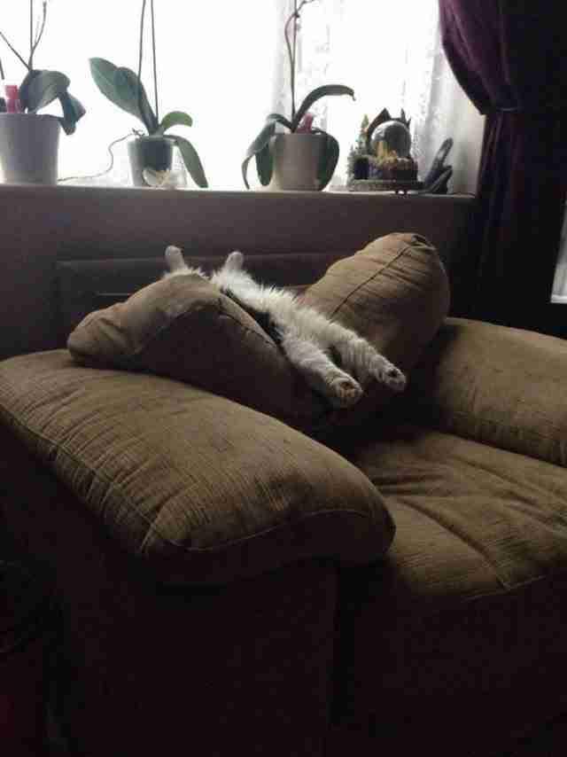 Αυτό το σκυλί που του αρέσει να κοιμάται ανάσκελα για να δροσίζεται από το κλιματιστικό