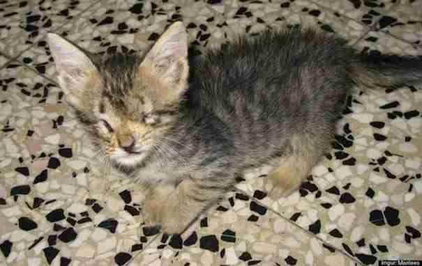 Ήταν διακοπές στην Ιταλία όταν βρήκε ένα τυφλό γατάκι που έκλαιγε για βοήθεια
