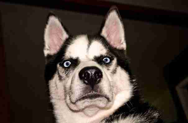 14 ξεκαρδιστικές φωτογραφίες σκύλων τη στιγμή που καταλαβαίνουν ότι τους πάνε στον κτηνίατρο!