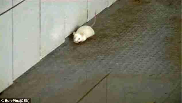 Επειδή αυτή ο τίγρης είχε κατάθλιψη, του έδωσαν να φάει ένα ποντίκι για σνακ. Διαβάστε όμως τι έγινε.