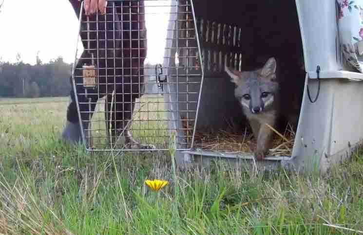 Αυτά τα ζώα έζησαν όλη τους τη ζωή σε κλουβιά. Δείτε την αντίδραση τους όταν τα ελευθέρωσαν
