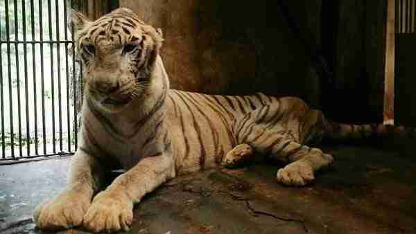 Τον αποκαλούν «Ζωολογικό κήπο του θανάτου.» Διαβάστε και θα καταλάβετε γιατί..