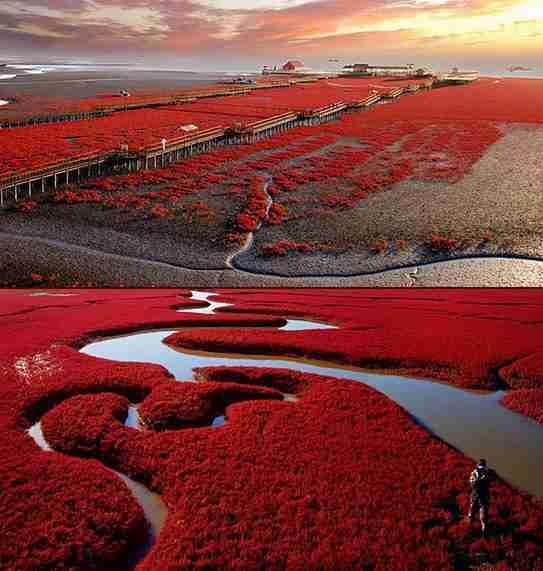 Κόκκινη Παραλία Panjin, Κίνα