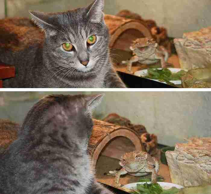 28 ξεκαρδιστικές φωτογραφίες ζώων που προχώρησαν το Photobomb στο επόμενο επίπεδο