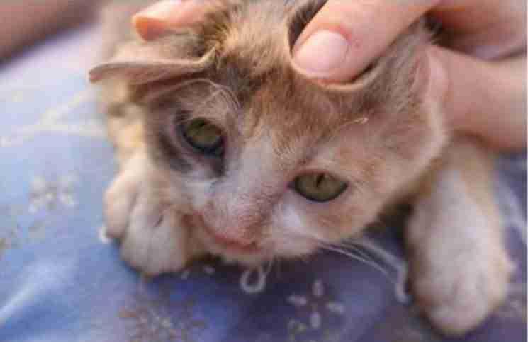 Ήταν η πιο άσχημη γάτα στον κόσμο. Μέχρι που ένα 7χρονο κορίτσι έκανε κάτι μοναδικό.