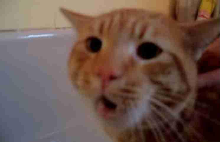 Αυτή η γάτα αρνείται να μπει στη μπανιέρα φωνάζοντας στην ιδιοκτήτρια της μία λέξη!