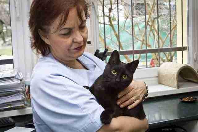 Λίγο πριν το κάνουν όμως, ένας κτηνίατρος τον άκουσε ξαφνικά να γουργουρίζει! Αυτό ήταν! Αμέσως άρχισε τις προσπάθειες για να τον σώσει.