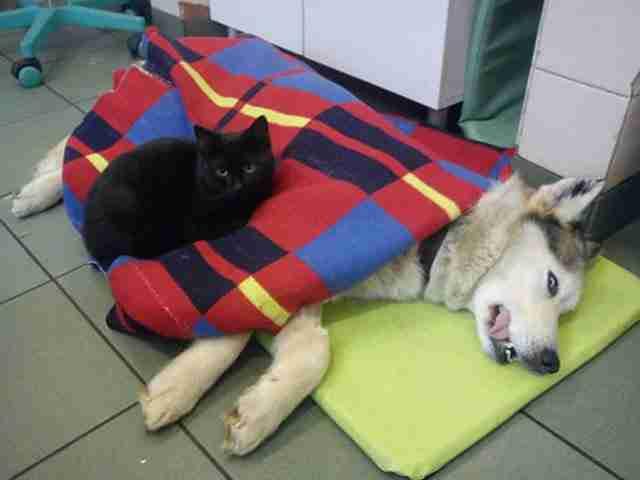 Οι κτηνίατροι στο καταφύγιο χαριτολογώντας λένε ότι είναι μια νοσοκόμα με πλήρες ωράριο!